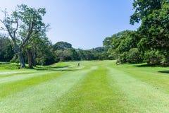Golfspelare som går scenisk kurs för farled royaltyfri fotografi