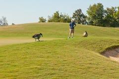 Golfspieler und Gänse auf Golfplatz Stockbilder