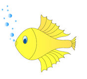 Golg fish Royalty Free Stock Image