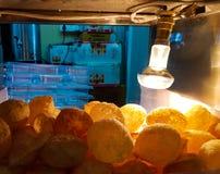 Golgappa chaat fuchka in glasdoos kernachtig door gloeilampenhitte die wordt gehouden stock afbeeldingen