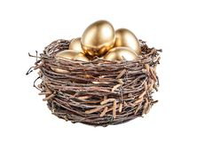 Golgen eggs in a basket of birch branches stock images