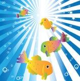 Golgfish dans l'eau bleue Photographie stock