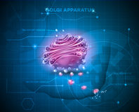 Golgi apparatus abstract technology background Stock Images