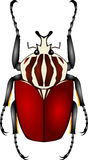 Goliath beetle royalty free illustration
