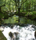 Golitha Falls Bodmin Moor Cornwall England Stock Photography