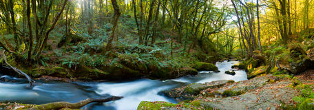Golitha Falls Cornwall Royalty Free Stock Photos