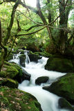 Golitha falls in Cornwall Stock Photography