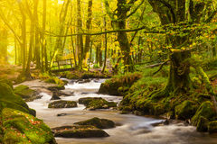 Golitha Falls Cornwall Royalty Free Stock Photo