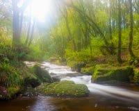 Golitha Falls Cornwall Stock Image