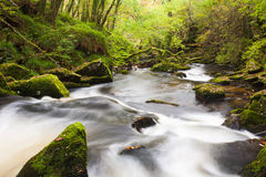 Golitha Falls Cornwall England Stock Photos