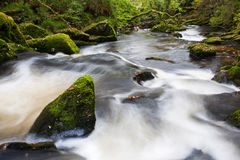 Golitha Falls Cornwall England Royalty Free Stock Images