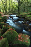 Golitha Falls in Cornwall, England Stock Image
