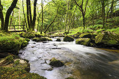 Golitha Falls in Cornwall Stock Photo