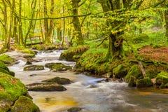 Golitha Falls Cornwall Stock Photo