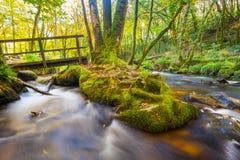 Golitha Falls Cornwall Royalty Free Stock Images