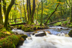 Golitha Falls Cornwall Stock Photography