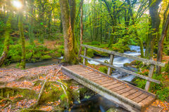 Golitha Falls Cornwall Royalty Free Stock Images