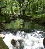 Golitha spadki Bodmin Cumują Cornwall Anglia Fotografia Stock