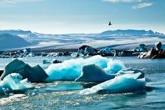 Golondrina de mar ártica Imágenes de archivo libres de regalías