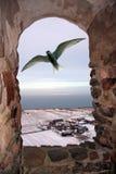 Golondrina de mar ártica fuera de la ventana Fotos de archivo