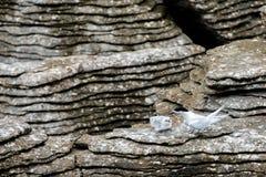 Golondrina de mar que alimenta su polluelo contra el contraste oscuro de las formaciones de roca de la crepe, Punakaiki imagen de archivo