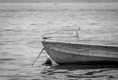 Golondrinas de mar árticas en el pequeño barco de madera, en monocromo Foto de archivo libre de regalías