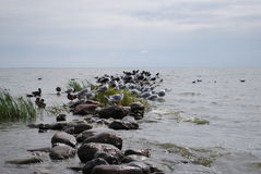 golondrinas de mar y gaviotas Fotografía de archivo