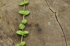 Golpeado abajo el tronco Tarros de hojas del árbol y de la planta Imágenes de archivo libres de regalías