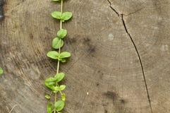 Golpeado abajo el tronco Tarros de hojas del árbol y de la planta Imagen de archivo