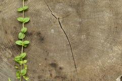 Golpeado abajo el tronco Tarros de subir de las hojas del árbol y de la planta Imagen de archivo