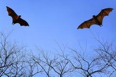 Golpee las siluetas que vuelan en el cielo - festival de Halloween Foto de archivo libre de regalías