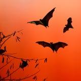 Golpee las siluetas que vuelan en el fondo del aislante - festiva de Halloween Foto de archivo