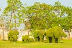Golpeie o Pa no elefante do hedgesin do palácio nos jardins Ayutthaya Imagens de Stock