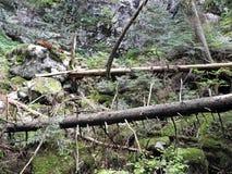 Golubinjak, Gorski kotar, natura szczegóły, Chorwacja, 1 Zdjęcia Royalty Free