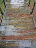Golubinjak, las w opóźnionej jesieni, 10 Zdjęcia Stock