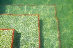 Golv av en simbassäng med krusningar av ljus och den gröna keramiska mosaiktegelplattan Royaltyfri Foto