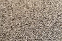 Golv som är mattt på jordning Royaltyfri Fotografi