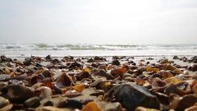 Golven die de kust omwikkelen stock videobeelden