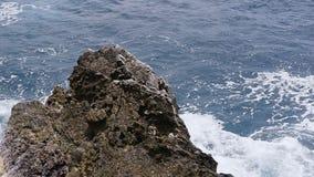 Golven die over rotsen in de zomerdag verpletteren ADRIATISCHE OVERZEES stock videobeelden