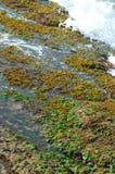 Golven die over zeewier behandelde rotsen breken Royalty-vrije Stock Foto's