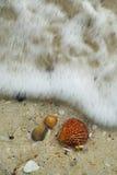 Golven die overzeese shells naderen Stock Afbeeldingen
