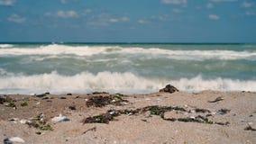 Golven die strand raken stock video