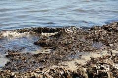 Golven en algen van Thyrreense Zee, abstract achtergrond en landschap Royalty-vrije Stock Afbeelding