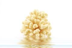 Golven en koraal Stock Foto's