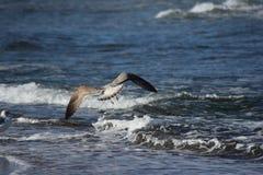 Golven en zeemeeuwen bij strand in Denemarken Stock Afbeeldingen