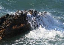 Golven op de rotsen Stock Foto's