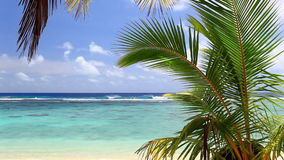 Golven op een strand met palm