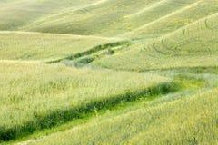 Golven van gras in Toscanië Royalty-vrije Stock Foto's