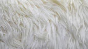 Golven van zuivere witte wol Stock Afbeelding