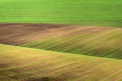 Golvend abstract landschap met groene gebieden Royalty-vrije Stock Foto